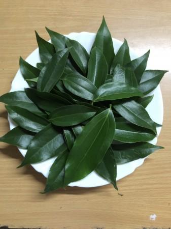 台灣土肉桂葉